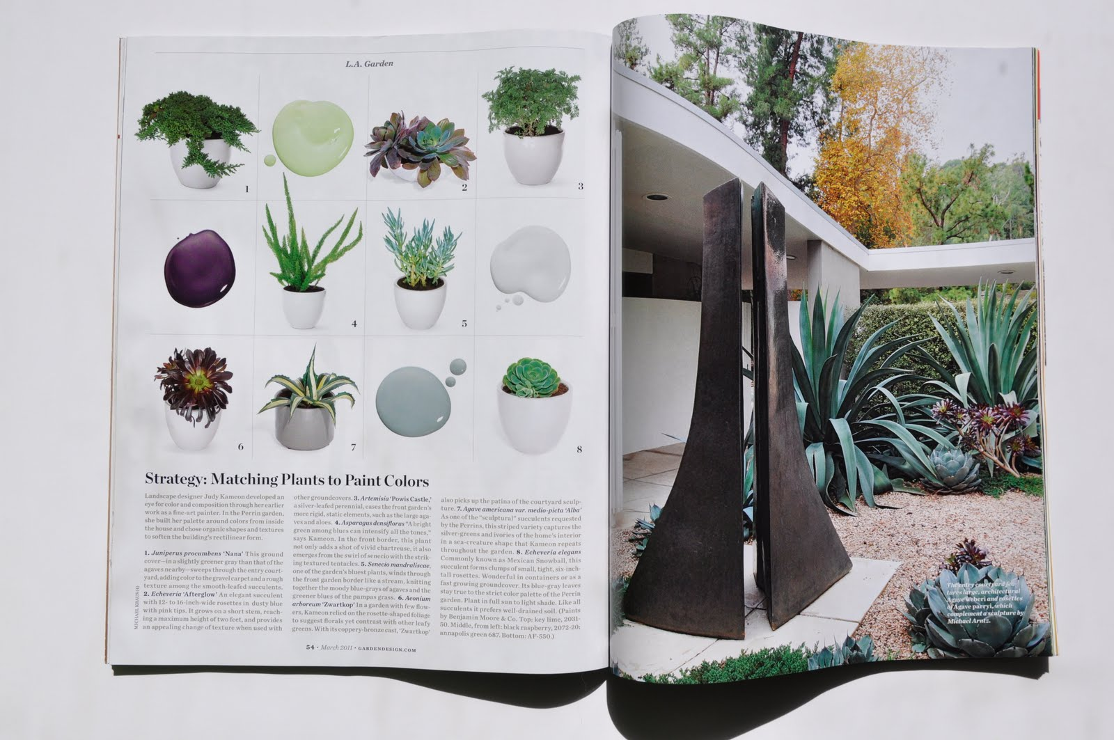 garden design magazine relaunch fresh designing with succulents