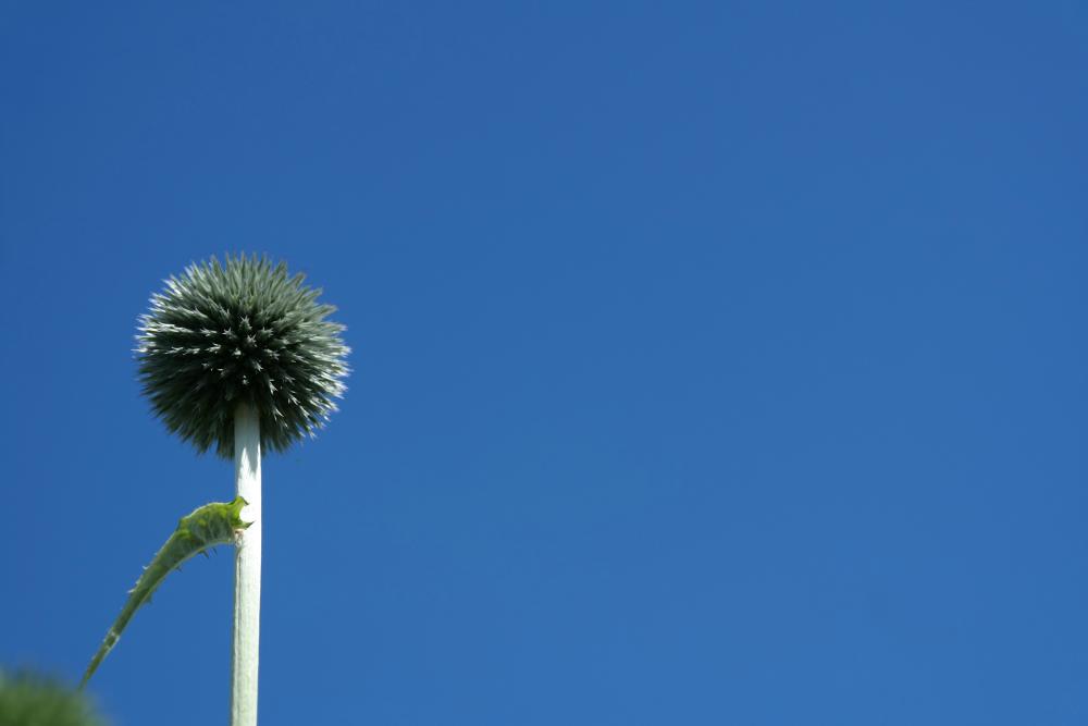 David Welch Winter Gardens - Duthie Park, Aberdeen. Spiky plant.