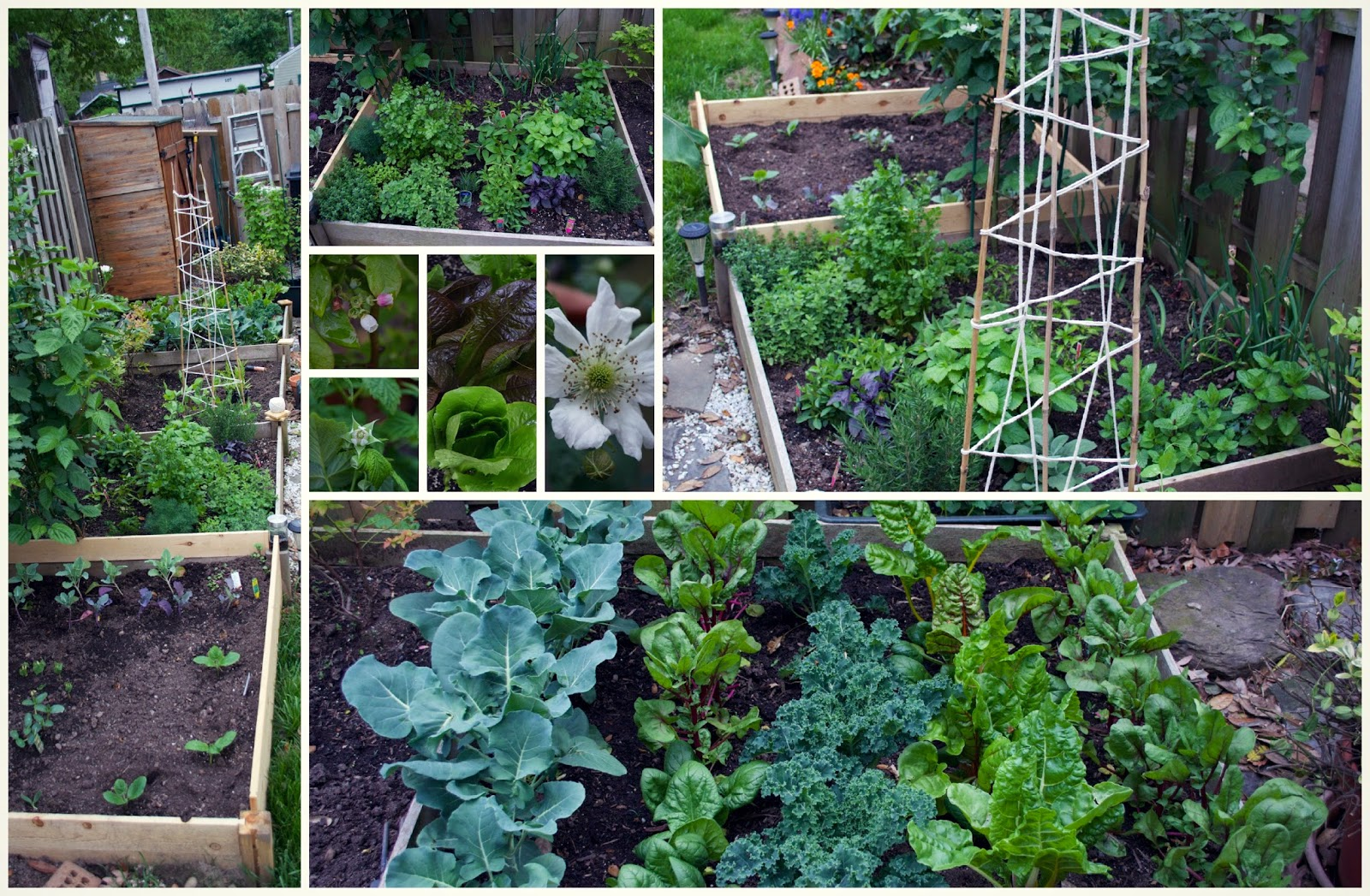 Our Kitchen Garden Cooking For Kishore How To Tuesday Planting A Kitchen Garden