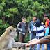 Pulau Kembang Atau Pulau Monyet ya?
