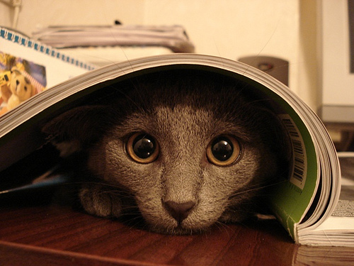 How To Get A New Cat Out Of Hiding
