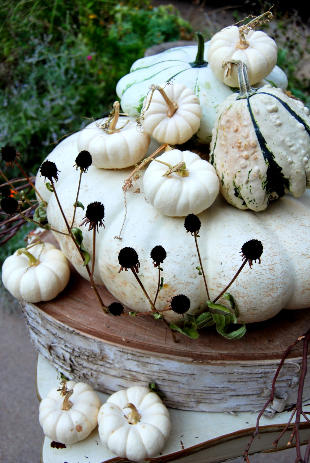 Ghostly White Pumpkins 7