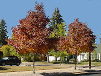 Autumn Ash2