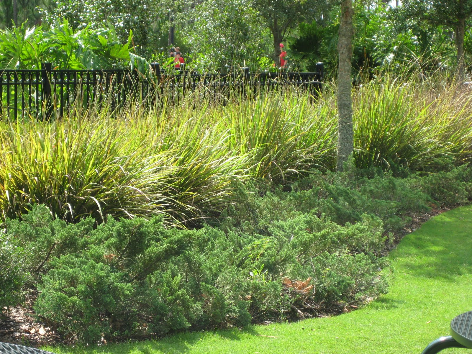 Central florida landscaping plants for Grass bushes landscaping