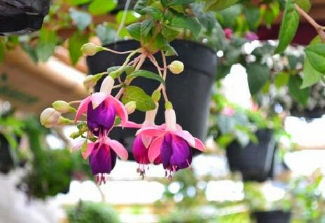 Ornamental Plants Hanging At Home