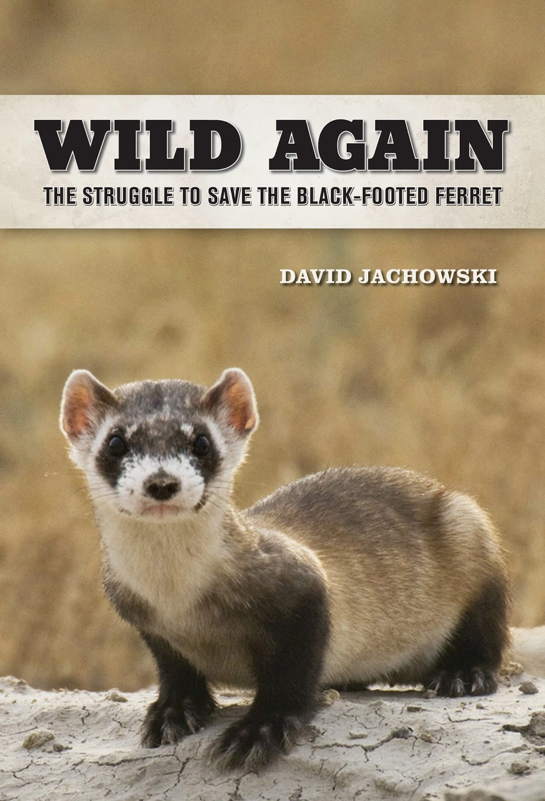 Save A Black Footed Ferret 19