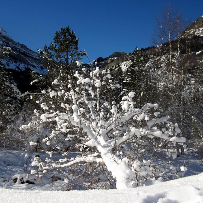 arbre enneigé dans le cirque de Gavarnie - http://spicerabbits.blogspot.fr/