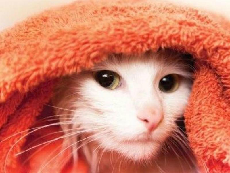 Asyiknya Dunia Kucing Apakah Kucing Perlu Dimandikan