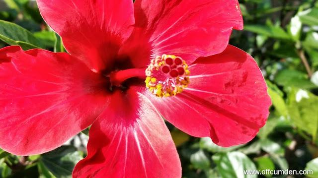 Red flower spain