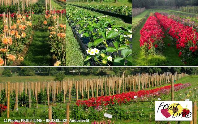 FRUIT TIME - Cueillette de fruits et de fleurs en self-service à Bruxelles - Aux portes du Pajottenland - Bruxelles-Bruxellons