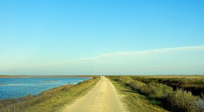 Driving through the Brazoria National Wildlife Refuge