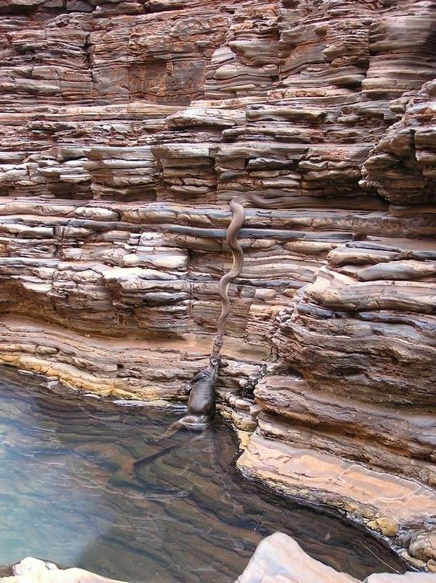 enhanced buzz 27775 1392615456 27 Fotos que provam que a Austrália é um lugar louco