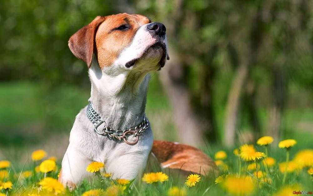 fotos de perros de raza