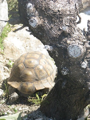 Tortoise Kos Greece