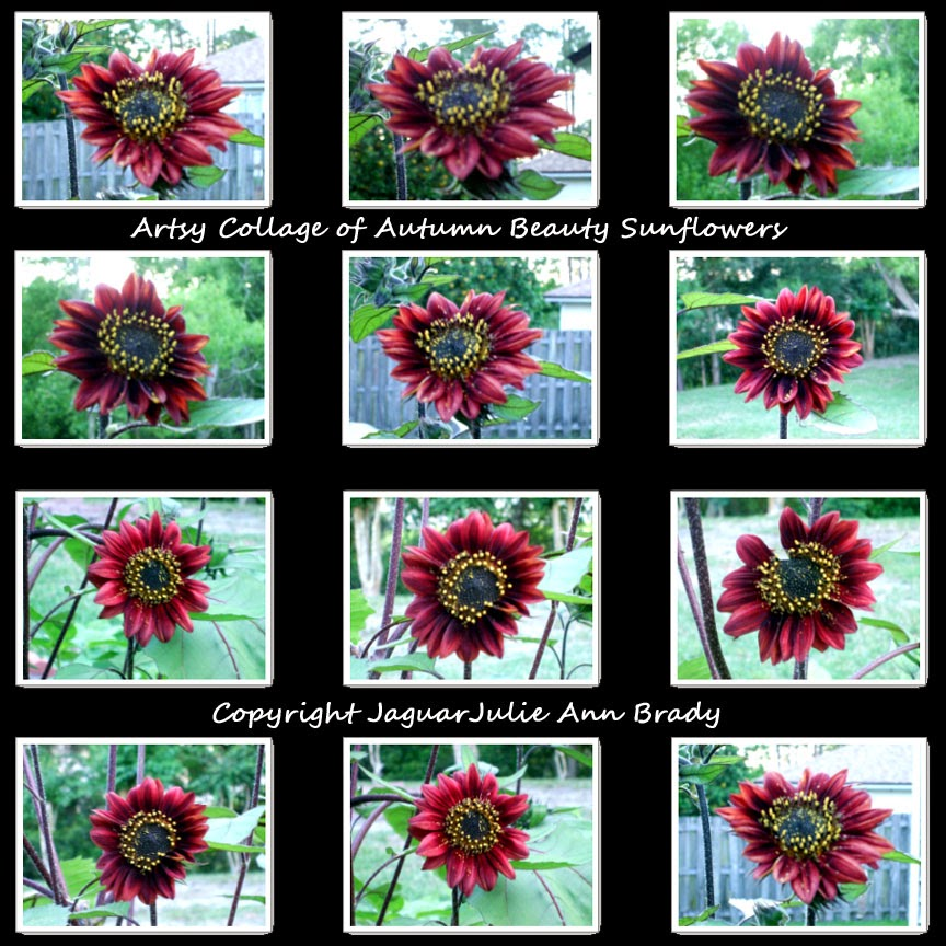 artsy autumn beauty sunflower collage on black