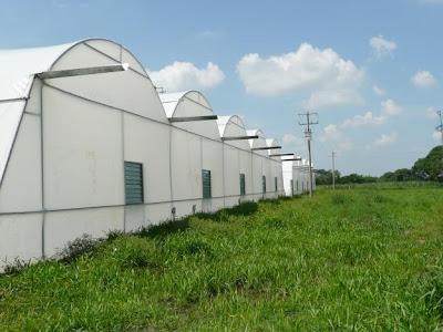 agricultura protegida e insumos agricolas