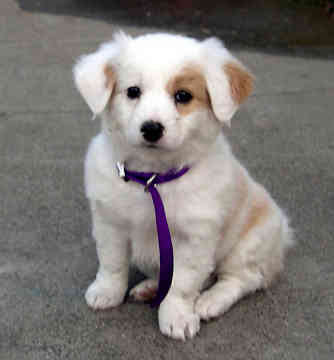 Types Puppies on Dog Breed Informations  Types Of Modern Domestic Dog