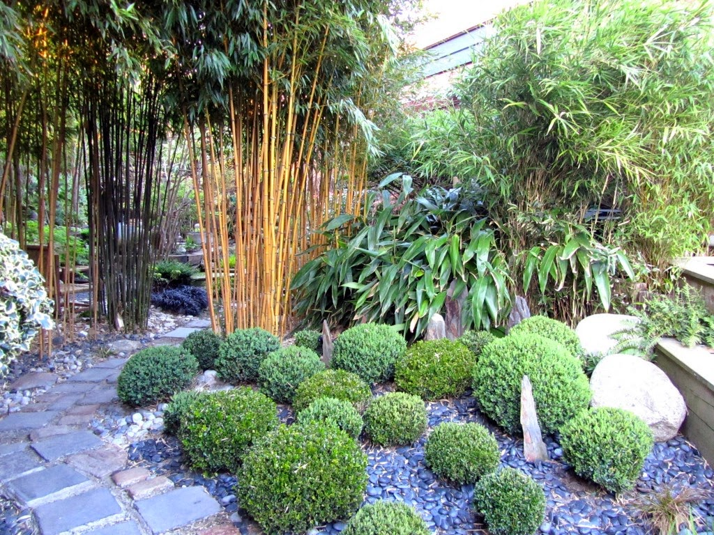 Paradis express le sentier du chimonobambusa lille - Petit jardinit lille ...