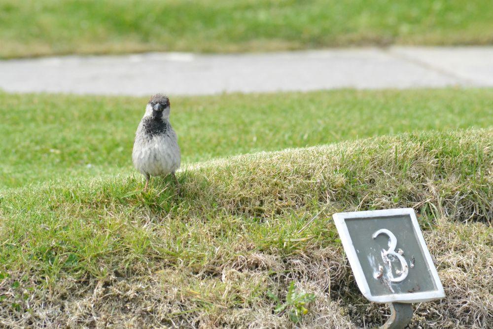 bird skara brae orkney historic scotland