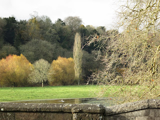 A variety of trees across flood fields by River Stour - from bridge at Blandford Forum in Dorset
