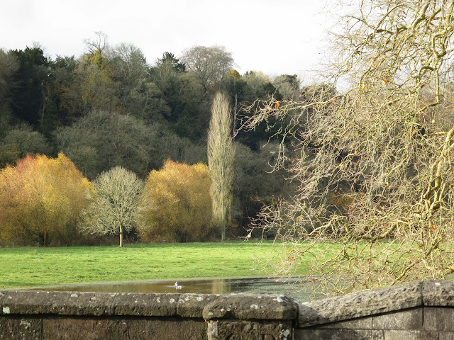 Bryanston woods across water meadows from Blandford Forum bridge.