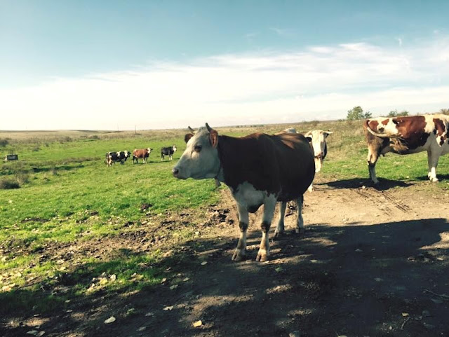 La Petrovaselo în Vie, invie alergarea prin natură. Trail Run Petrovaselo. 24 octombrie 2015. Florin Chindea Maseur Oficial al evenimentului. Primii concurenţi
