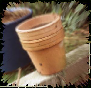 Un blog à propos du jardin et des plantes, pour redécouvrir la Nature et aussi sur le partage des connaissances sur le jardinage.