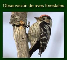 http://iberian-nature.blogspot.com.es/p/ruta-tematica-observacion-de-aves_2.html