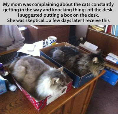 My mom was complaining about the cats constantly getting in the way and knocking things off the desk. I suggested putting a box on the desk/ She was skeptical... a few days later I receive this.