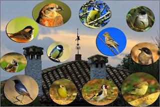 Aves del refugio estepa