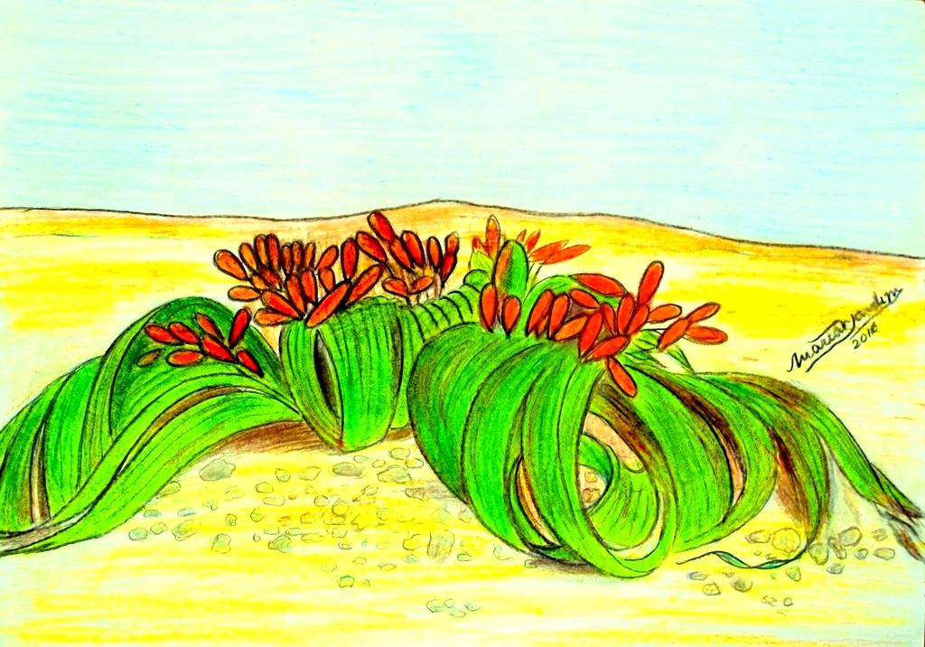 Deserto do Namibe na ponta do lápis...