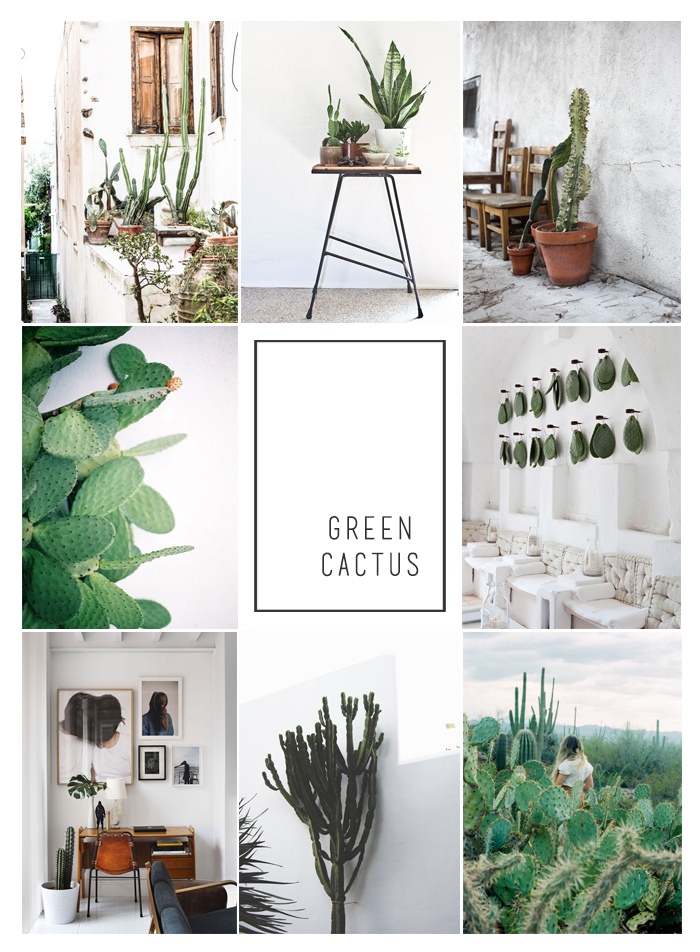 Cactus in interiors