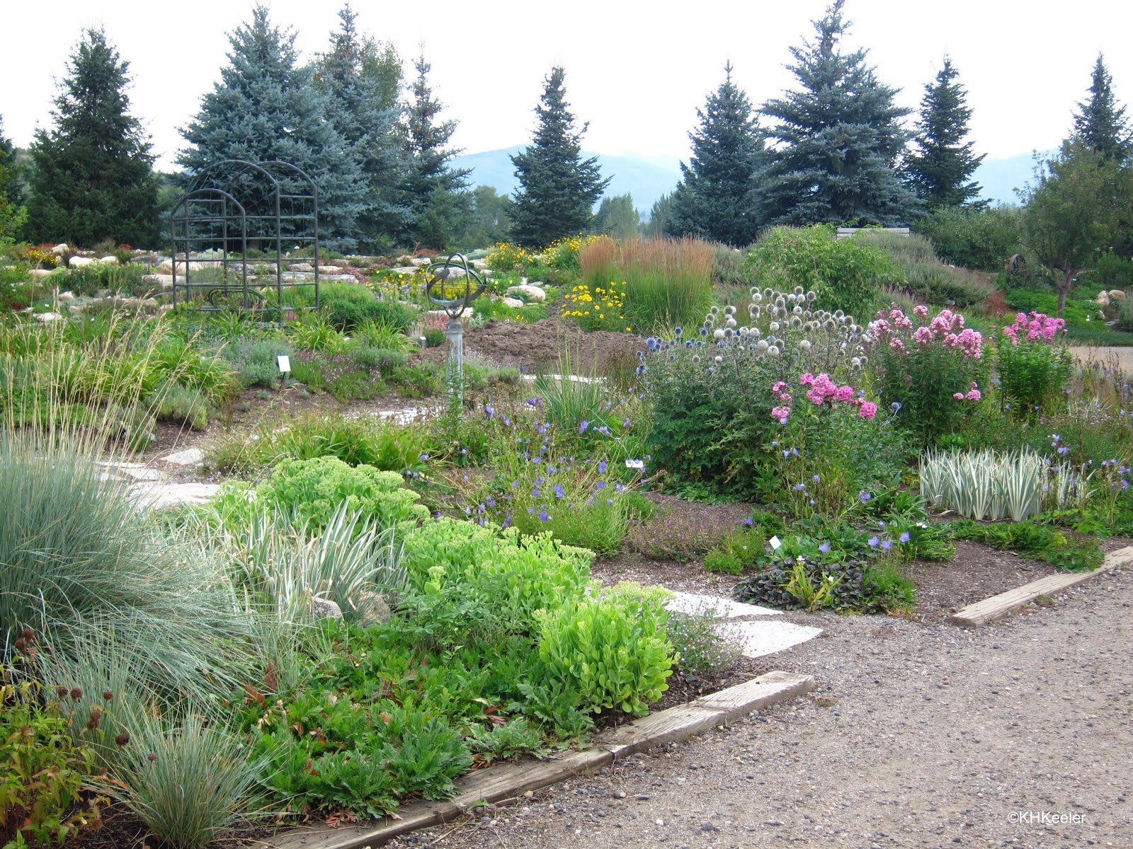 A Wandering Botanist Visiting Northern Colorado Yampa River Botanic Park
