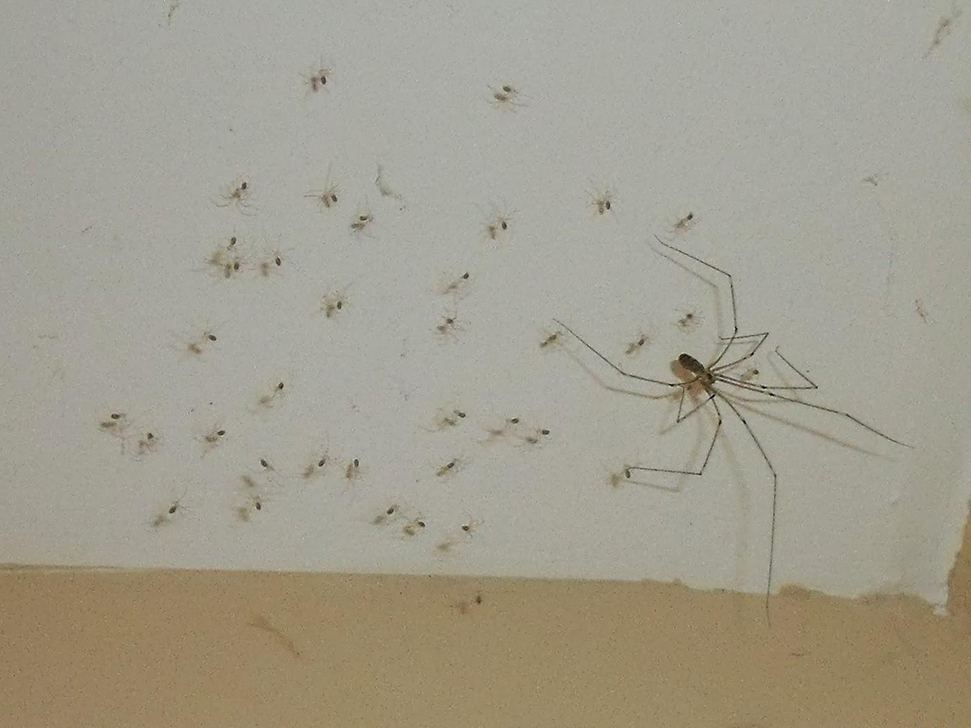 Les mots d 39 isis avoir une araign e au plafond for Araignees dans maison