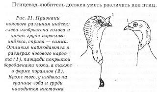 muzhskaya-analnaya-masturbatsiya-forum