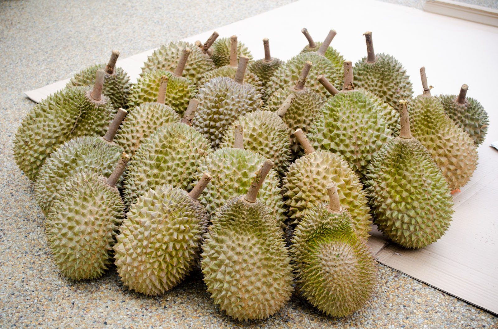 musang king durian feast food momento. Black Bedroom Furniture Sets. Home Design Ideas