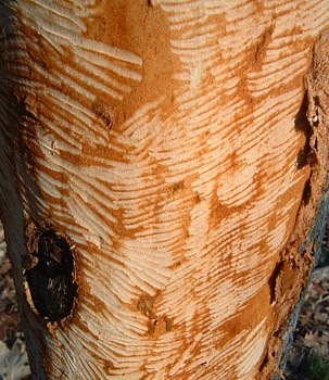 do not cut trees essays Free research paper on deforestation essays, dissertations on ecology at essay lib custom writing service call toll-free 1-855-422-54-13 chat and phone working hours: monday 00:00 — saturday 13:00 the cutting down of trees for sale as timber or pulp.