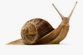 Move at a snail´s pace idiom