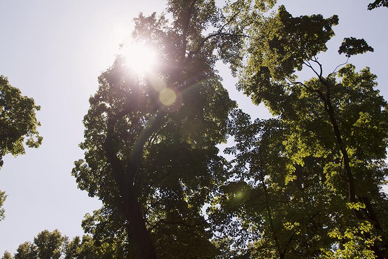trees sunshine Санкт-Петербург солнце сквозь деревья