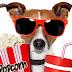 Οι αγαπημένοι μας κινηματογραφικοί σκύλοι
