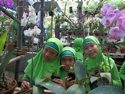 Kebun Anggrek