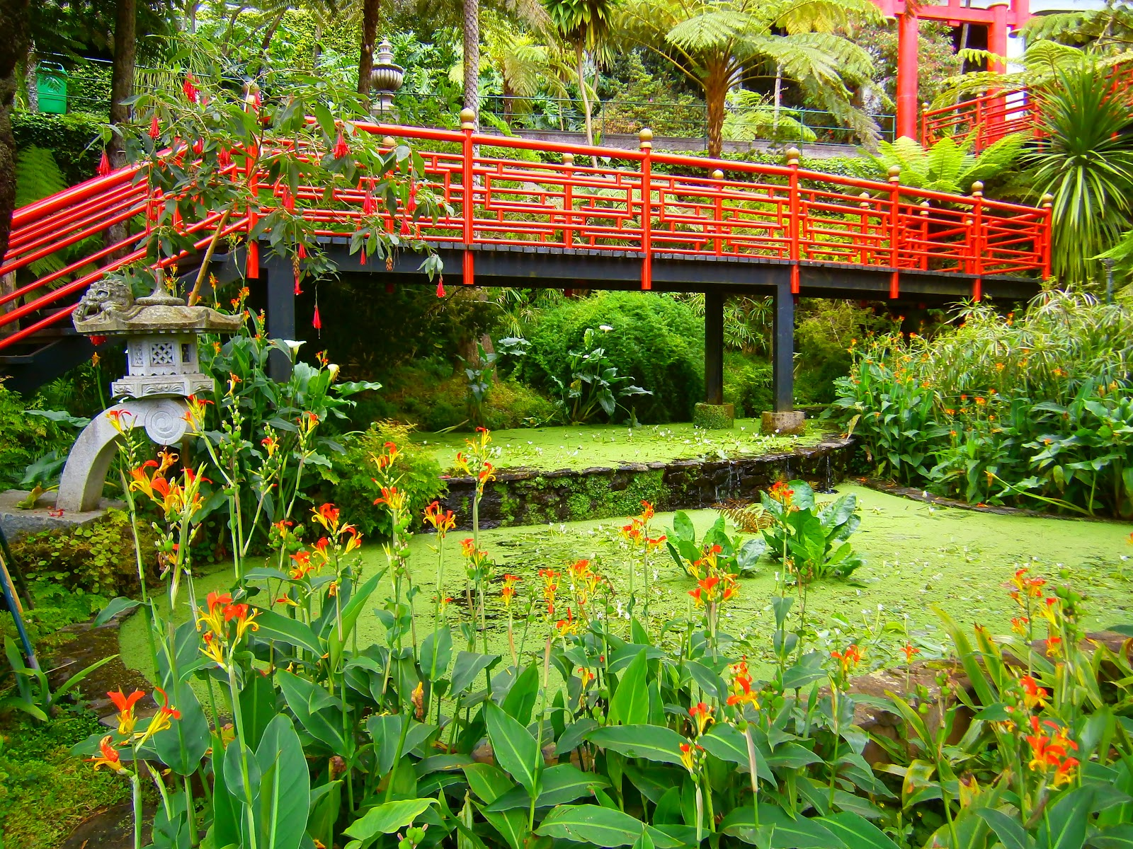 plantas jardim tropical : plantas jardim tropical:Madeira Jardim Tropical