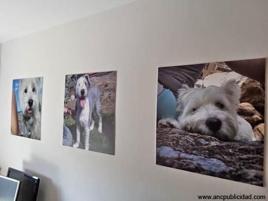 impresión de fotos con forex