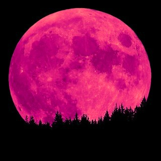 A poem a day day 297 pink moon What does it mean when the moon is pink