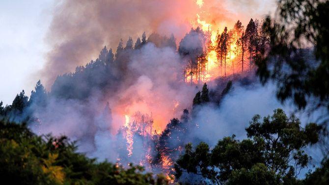 un bosc es crema, i ara què? (5è)