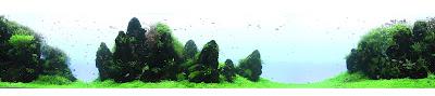 Panorama des Riesenaquariums von Takashi Amano