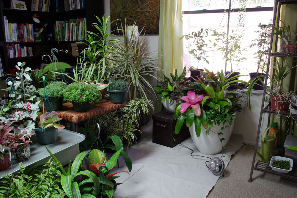 The rainforest garden how to plant a garden indoors for Diy garden room