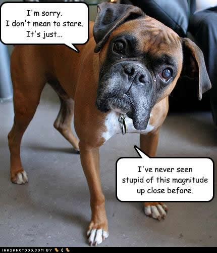 funny-dog-pictures-stupid-magnitude.jpg