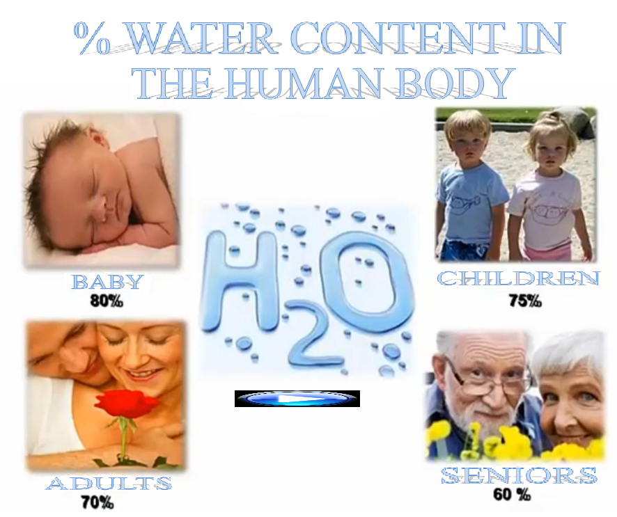 % WATER CONTENT IN THE HUMAN BODY