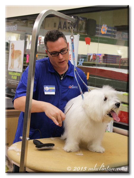 PetSmart groomer using thinning scissors